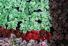 Fresh garden abstract. Colorful and green Fresh garden abstract Stock Image