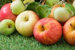 Fresh garden apples on green grass Royalty Free Stock Image