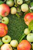 Fresh garden apples on green grass and space for text, top view Stock Image