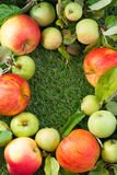 Fresh garden apples on green grass and space for text, vertical Stock Photos