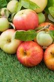 Fresh garden apples on green grass, vertical Royalty Free Stock Photos