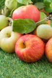 Fresh garden apples on green grass, vertical, close-up. Harvest of fresh garden apples on green grass, vertical, close-up Royalty Free Stock Photo