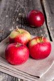 Fresh garden apples. Vertical, close up Stock Images