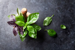 Fresh garden basil herbs in mortar Royalty Free Stock Images