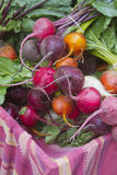 Fresh Garden Beets Stock Images