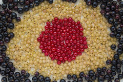 Fresh garden berries, currant, red, white and black. Fresh garden berries, currants, red, white, and black scattered around Royalty Free Stock Photo