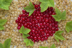 Fresh garden berries, currant, red, white. Fresh garden berries, currants, red, white, scattered around Royalty Free Stock Photography