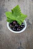 Fresh garden blackcurrant in white bowl Royalty Free Stock Images