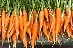 Fresh garden carrots Stock Photos