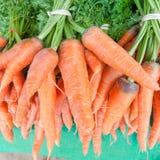 Fresh garden carrots Stock Images