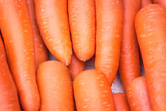 Fresh garden carrots Stock Image