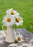 Fresh garden chamomile bouquet Stock Photography