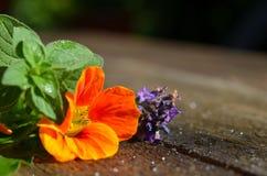 Fresh garden Flower herbs Royalty Free Stock Images