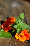 Fresh garden Flower herbs stock photo