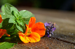 Fresh garden Flower herbs Royalty Free Stock Image