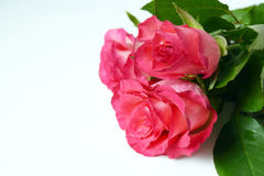 Fresh garden flowers on white background. Bouquet pink roses stock images