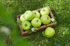 Free Fresh Garden Green Apples In Box Royalty Free Stock Image - 150029946