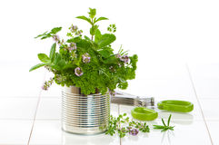Fresh Garden Herbs Stock Photo