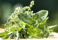 Fresh garden herbs Royalty Free Stock Photo