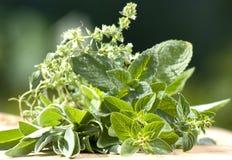 Fresh garden herbs Royalty Free Stock Photo
