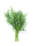 Fresh garden herbs. Dill Stock Photos