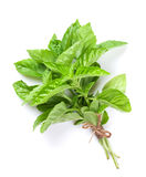 Fresh garden herbs. Green basil stock photos