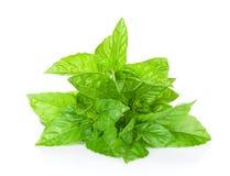 Fresh garden herbs. Green basil Stock Images