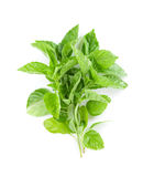Fresh garden herbs. Green basil Royalty Free Stock Photo