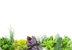 Fresh garden herbs Royalty Free Stock Images