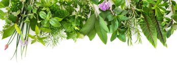 Fresh garden herbs isolated on white background. Various kinds of fresh garden herbs isolated on white background Stock Image