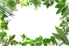 Fresh garden herbs isolated on white background. Various kinds of fresh garden herbs isolated on white background Stock Photo