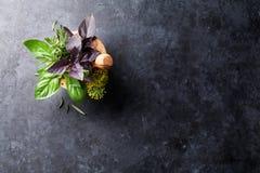 Fresh garden herbs in mortar Stock Image
