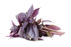 Fresh garden herbs. Purple basil Royalty Free Stock Photography