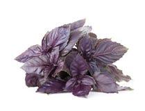 Fresh garden herbs. Purple basil Stock Photography