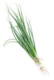 Fresh garden herbs. Spring onion Stock Image