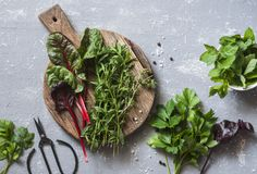 Fresh garden herbs - tarragon, chard, mint, celery, spinach, thyme on the cutting board and vintage scissors on a gray background, stock photo