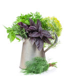 Fresh garden herbs in watering can Royalty Free Stock Photo