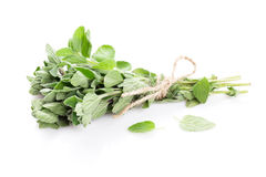 Fresh garden oregano herb Royalty Free Stock Photography
