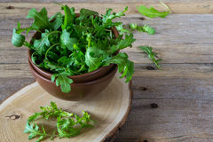 Fresh garden organic arugula, ruccola  in bowl  on rustic background ready for salad. Stock Photography