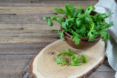 Fresh garden organic arugula, ruccola  in bowl  on rustic background ready for salad. Stock Images