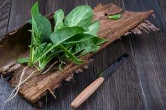 Fresh garden organic spinach on the bark of a tree. Healthy vegetarian food. Fresh herbs Stock Photos