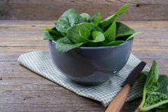 Fresh garden organic spinach in bowl  on rustic background ready for salad. Vintage still life Royalty Free Stock Photo