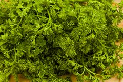 Fresh garden parsley Royalty Free Stock Image