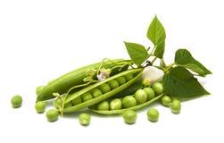 Fresh Garden Peas Stock Photography