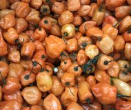 Fresh garden Peppers background Stock Photography
