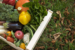 Fresh Garden Produce in a crate. Wooden box filled with garden produce. It standing on grass and fallen leaves, heaped with varieties of freshly picked Royalty Free Stock Photo