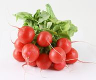 Fresh garden radish Royalty Free Stock Images