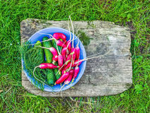 Fresh garden radish, cucumbers and dill in a blue ceramic plate. On a rough old cracky wooden board over the green grass Royalty Free Stock Photo