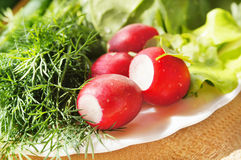 A fresh garden radish and greenery Stock Images