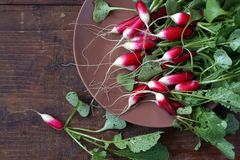 Fresh garden radish. Top view. Fresh garden radish with a tops of vegetable on a wooden table. Top view Royalty Free Stock Images